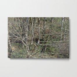 In the wild wood Metal Print