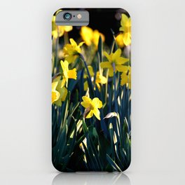 DAFFODILS IN THE LATE SPRING AFTERNOON LIGHT iPhone Case