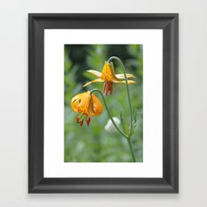 Wild Tiger Lily  Framed Art Print
