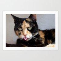 Tortoiseshell Cat Selfie Art Print