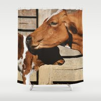 cows Shower Curtains featuring Cows by Ana Francisconi