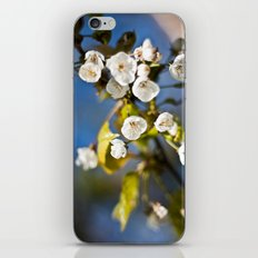 Spring is Near iPhone & iPod Skin