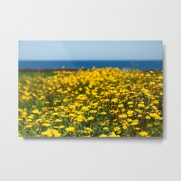 Field of yellow daisies Metal Print
