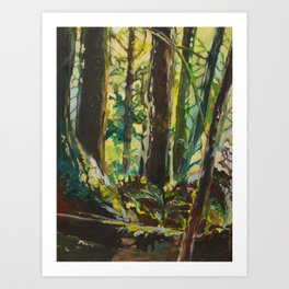 Evergreen Forest Art Print