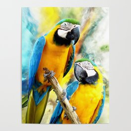 Macaw friends Poster