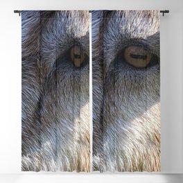 Goats Eye Blackout Curtain