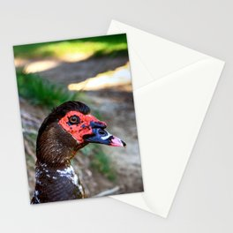 R U Looking at Me? - Colorful Stationery Cards