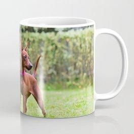 Outdoor portrait of a red miniature pinscher dog standing on the grass Coffee Mug