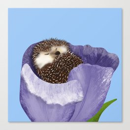 Sleeping Hedgehog In A Purple Tulip / Spring Decor Canvas Print