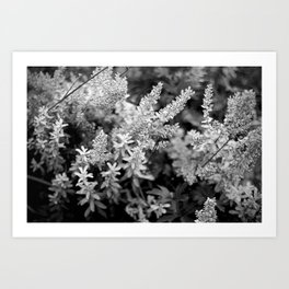 Leaves black n white Art Print