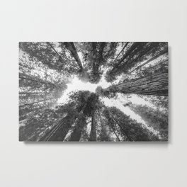 Into the Mist - Black and White Nature Photography Metal Print