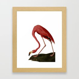 Flamingo Large Print Framed Art Print