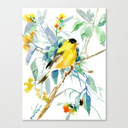 American Goldfinch, yellow sage green birds and flowers Canvas Print