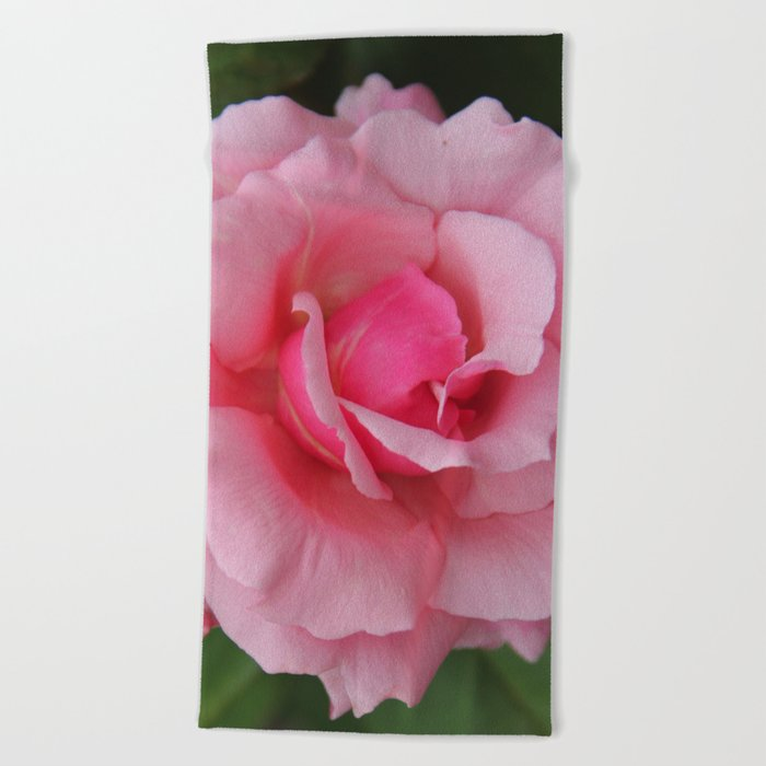 Soft Pink Rose Beach Towel
