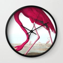Flamingo Vintage Scientific Bird Illustration Wall Clock