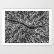 Snow pine forest Art Print