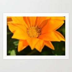 orange again Art Print