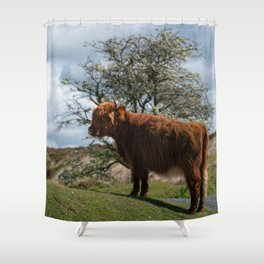 Highland Cow At Dartmoor National Park Shower Curtain