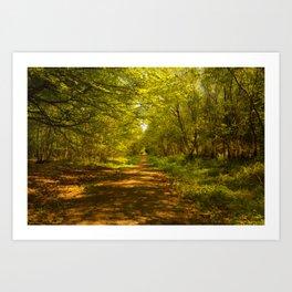 Woodland Views. Art Print