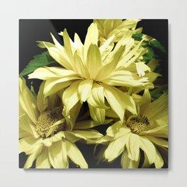 Yellow Chrysanthemum  Aster Flowers Metal Print