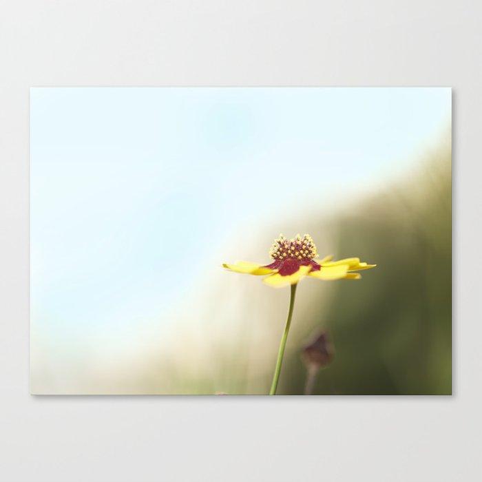 Swamp Flower Sun Canvas Print