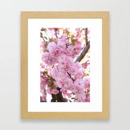 Pink Blossoms Beauty Framed Art Print