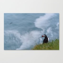 Lonely Puffing on a Cliff in Iceland Canvas Print