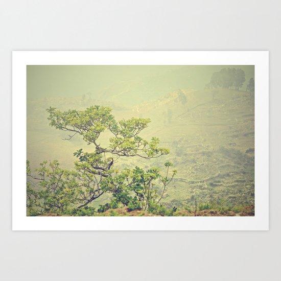 Caribbean Bonsai Art Print