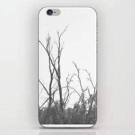 Dark Atmospheric forest iPhone Skin