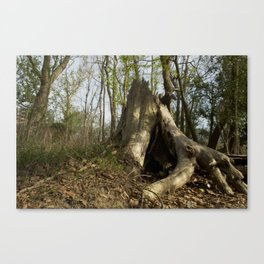 Take root Canvas Print
