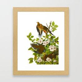 Carolina Pigeon Vintage Illustration Framed Art Print