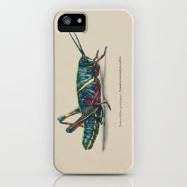 Eastern Lubber Grasshopper iPhone Case