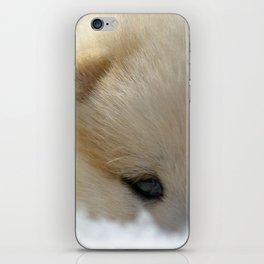 Shiba Inu Puppy iPhone Skin