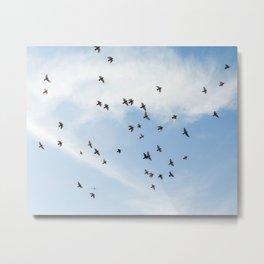 Pigeons in the sky Metal Print