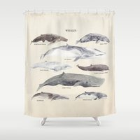 whales Shower Curtains featuring Whales by BySamantha | Samantha Ranlet