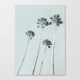 Palm Trees 14 Canvas Print