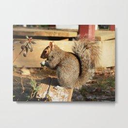 Nutty Metal Print