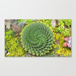 Swirly Succulent Canvas Print