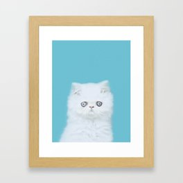 Lord Aries Cat - Photography 001 Framed Art Print