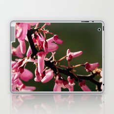 Cercis canadensis 'Forest Pansy' Laptop & iPad Skin