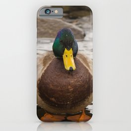 Mallard Duck at Powder Mill Animal / Wildlife Photograph iPhone Case