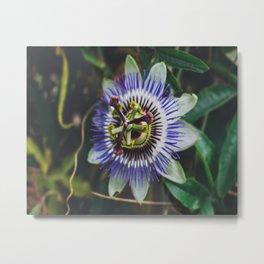 Flower Firework Metal Print