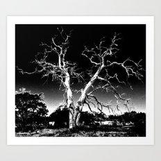 Biloxi Tree Art Print
