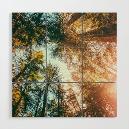 California Redwoods Sun-rays and Sky Wood Wall Art