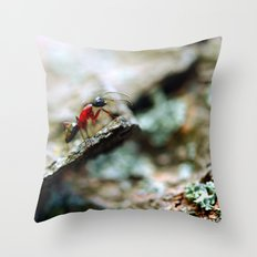 Ant Insect Photography, Nature, Macro, Home Decor Throw Pillow