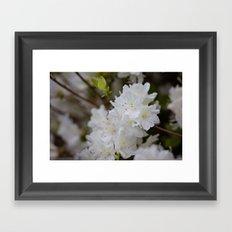 South Carolina Azaleas Framed Art Print