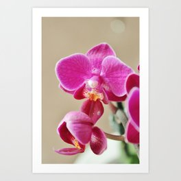 Mini Orchid in Purple Art Print