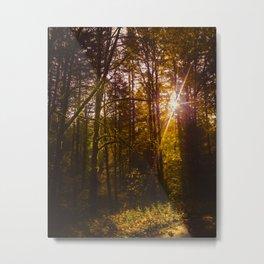 Through the Trees Metal Print