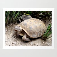 tortoise Art Prints featuring Tortoise by lennyfdzz