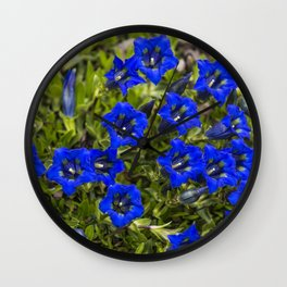 nice gentian - nice bloom Wall Clock